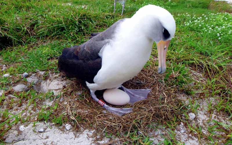 albatros1 - آلباتروس